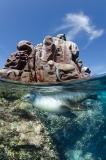 California Sea Lion 207