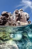 California Sea Lion 209