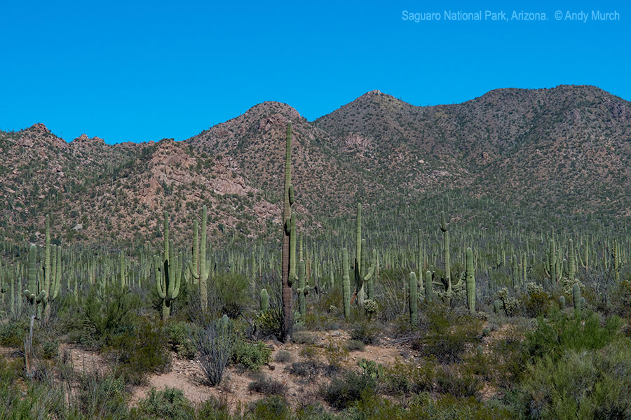 Saguaro National Park, Southern Arizona.