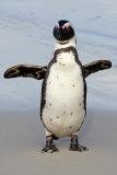 African Penguin 101