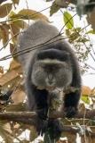 Blue Monkey 011