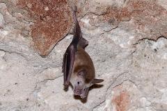 Buffy Flower Bat 003